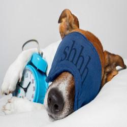 Κρεβάτια & Στρώματα Σκύλων